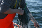Cod and flatfish sampling